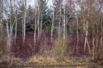 Wald, 2013